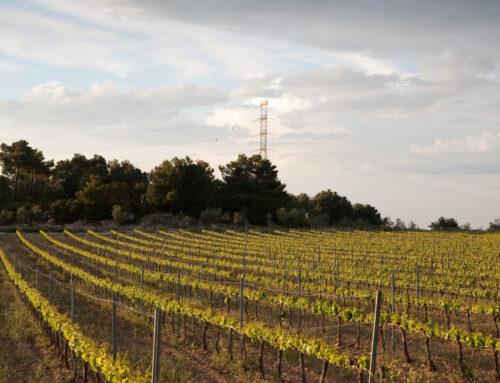 Què és un vi ecològic i quines característiques té